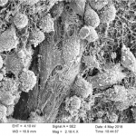 8. 3D printed nanocellulose scaffolds as a cancer cell culture model system